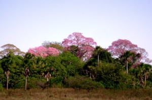 Pantanal Trees Green Stone Journeys