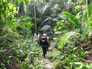 amazon-hikes-hiking-green-stone-journeys-wellness-tours-brazil