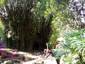 bamboo trail ilha grande 2