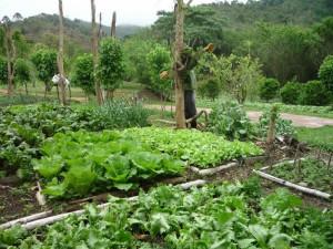 gardem-vegetarianism-green-stone-journeys-wellness-tours-brazil-visconde-maua-nature