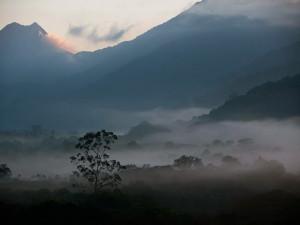 green-stone-journeys-wellness-tours-brazil-paraty-picinguaba-forest