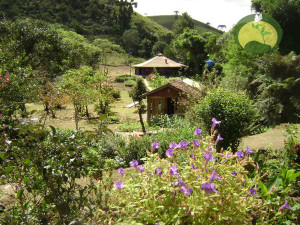 Visconde Maua Nature Mountain Coast Yoga Green Stone Journeys Wellness Tours Brazil