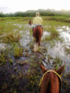 Horse Back Riding Pantanal