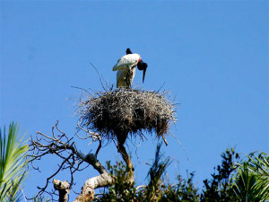 pantanal-nature-birds-green-stone-journeys-wellness-tours-brazil