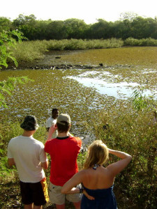 pantanal-nature-birdwatching-green-stone-journeys-wellness-tours-brazil