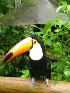 pantanal-nature-toucan-green-stone-journeys-wellness-tours-brazil