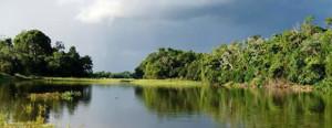 River Landscape Pantanal