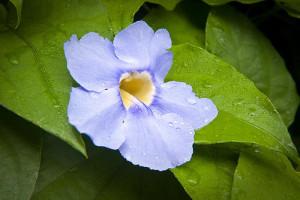 flowerIG